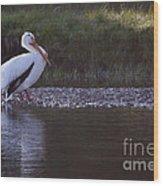 Mature Pelican   #9337 Wood Print