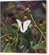 Maui Butterfly Wood Print