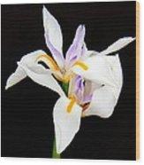 Maui Lilies On Black II Wood Print