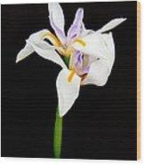 Maui Lilies On Black Wood Print