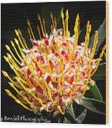 Maui Protea Wood Print
