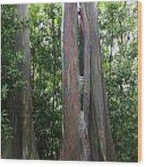 Maui Trees Wood Print
