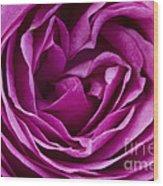Mauve Rose Petals Wood Print