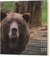 Max The Brown Bear Wood Print