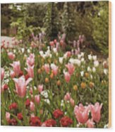 May Tulips Wood Print
