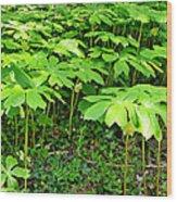 Mayapple Plants Wood Print