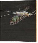 Mayfly Wood Print