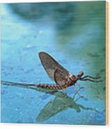 Mayfly Reflected Wood Print
