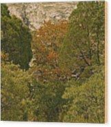 Mckittrick Canyon Trail Wood Print