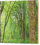 Mclane Wetlands Nature Preserve Wood Print