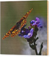 Meadow Color Wood Print