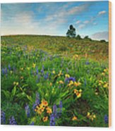 Meadow Gold Wood Print by Mike  Dawson