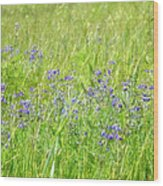 Meadow Lupine Wood Print