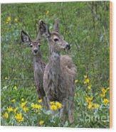 Meadow Meal Wood Print
