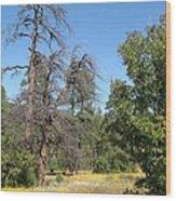 Meadow Over Oak Creek Canyon  Wood Print