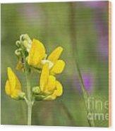 Meadow Vetchling Wild Flower Wood Print