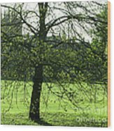 Meadow View Wood Print