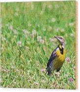 Meadowlark In The Wildflowers Wood Print