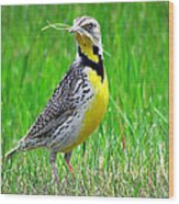 Meadowlark Wood Print