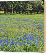 Meadows Of Blue And Yellow. Texas Wildflowers Wood Print