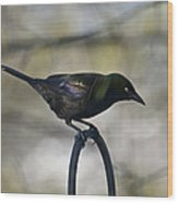 Mean Mr. Grackle Wood Print by Ross Powell