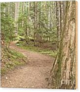 Meandering Along Cheakamus Lake Wood Print