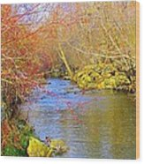 Meandering Stream  Wood Print