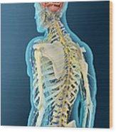 Medical Illustration Of Human Brain Wood Print