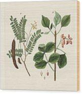 Medicinal Plants Wood Print