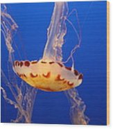 Medusa Jelly Wood Print