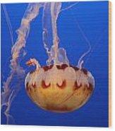 Medusa Jellyfish  Wood Print