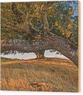 Medusa Oak Wood Print