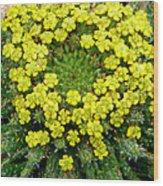 Medusa Succulent Flower Cluster Wood Print