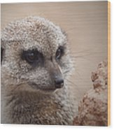 Meerkat 7 Wood Print by Ernie Echols