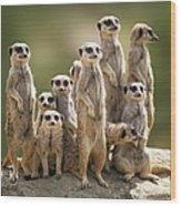 Meerkat Family On Lookout Wood Print