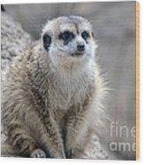 Meerkat Is Waiting Wood Print