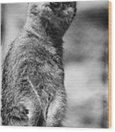 Meerkat Wood Print