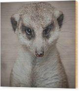 Meerkat Stare-down Wood Print