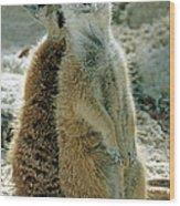 Meerkats Suricata Suricatta Wood Print