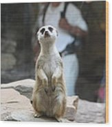 Meerket - National Zoo - 01132 Wood Print by DC Photographer