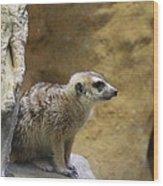 Meerket - National Zoo - 01135 Wood Print by DC Photographer