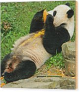 Mei Xiang Chowing On Frozen Treat Wood Print