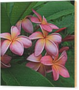 Melia Hae Hawaii Pink Tropical Plumeria Keanae Wood Print