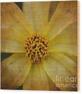 Mellow Yellow  2 Wood Print