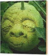 Melon Head Wood Print by Jack Zulli