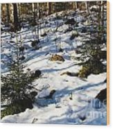 Melting Snow In A Forest In Late Winter Wood Print