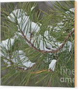 Melting Snow In The Pines Wood Print
