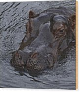 Menacing Hippo Wood Print