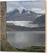 Mendenhall Glacier In Late Fall Wood Print