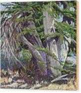 Mendocino Cypress II Wood Print